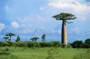 Forestree Sustainability - Madagascar
