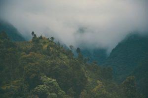 Forestree Sustainability - Haiti