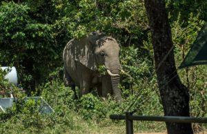 Forestree Sustainability - Kenya